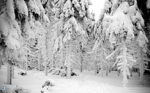 snowblind-1