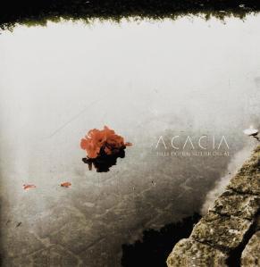 Acacia_promo